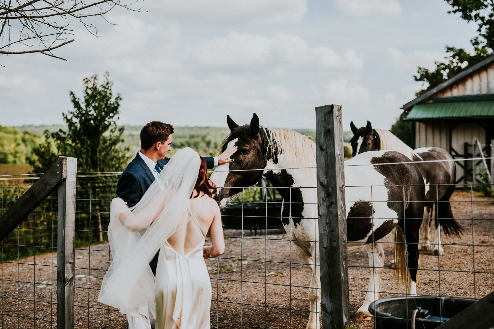 bride and groom with horses at olde tater barn wedding in central bridge, ny photographed by traverse the tides