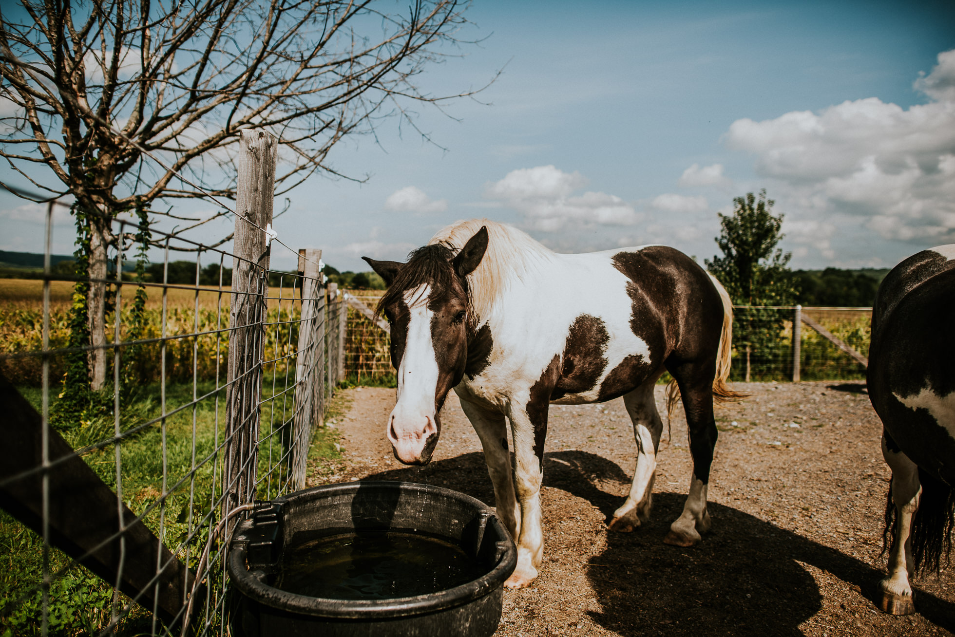 horses at olde tater barn wedding in central bridge, ny photographed by traverse the tides