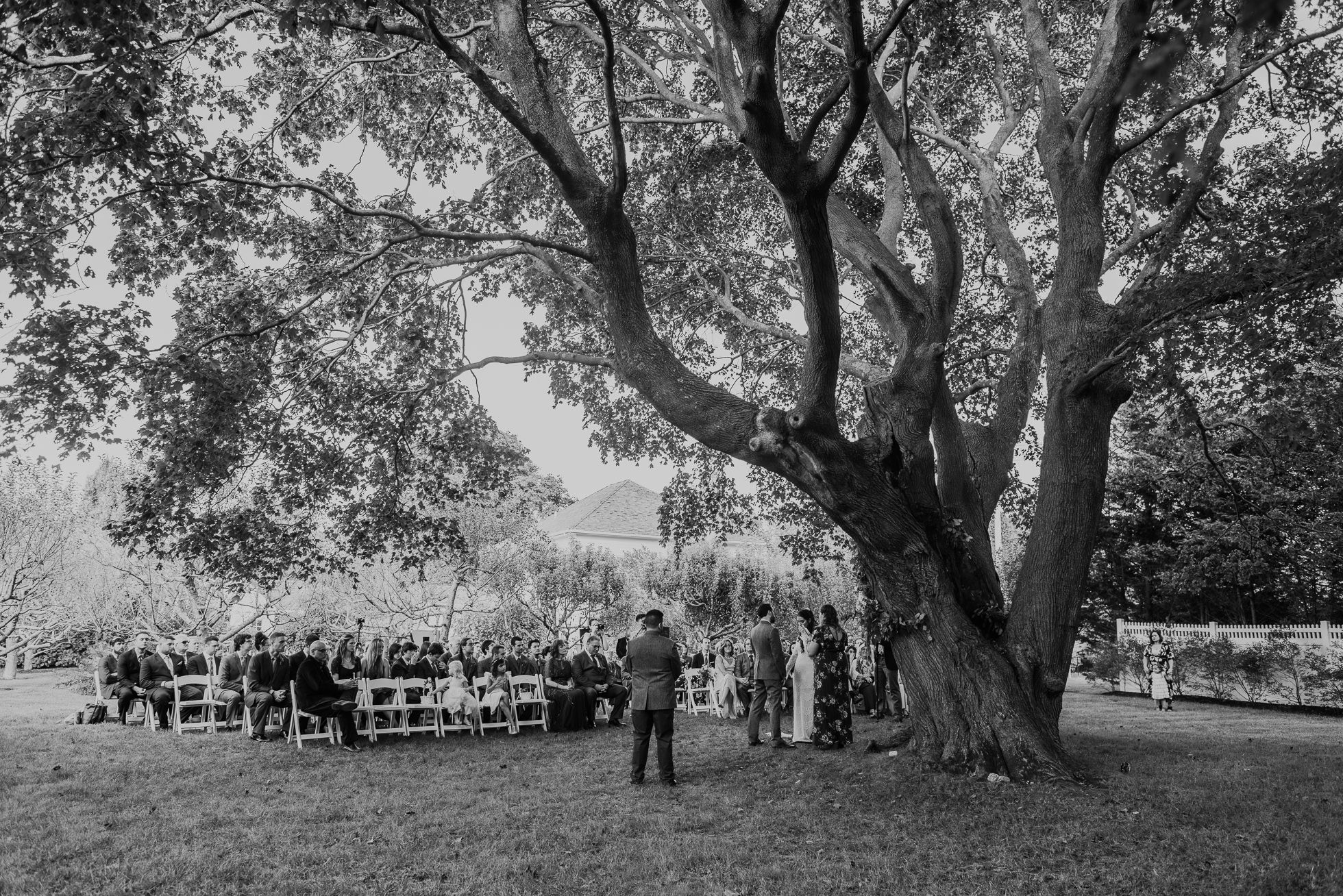 wedding ceremony under big tree